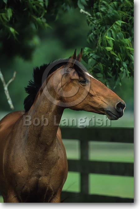 The Equines Of Paper Lantern Stables (updated) Pic11Hanoverian-Anika-CanaanRanch,TX