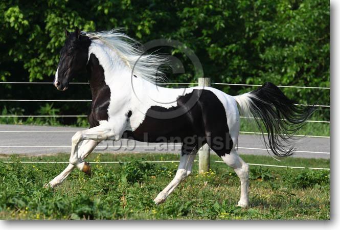 Bob Langrish Equestrian Photographer Galleries